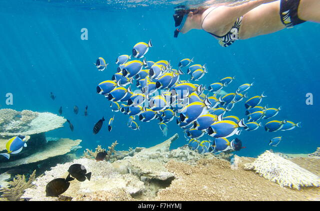 Girl snorkeling with fish, Maldives - Stock Image
