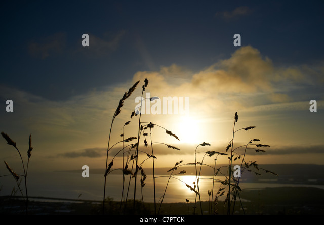 View of Belfast Lough and County Down from Cave Hill at sunrise with wild grass in foreground - Stock-Bilder