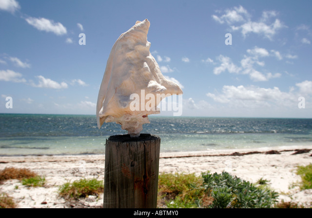 Turks and Caicos Grand Turk Atlantic Ocean conch shell Indigenous Horse Shelter - Stock Image