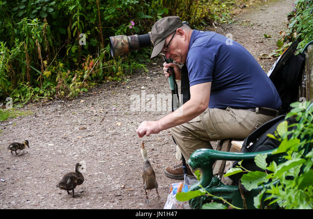 Melton Mowbray 29th July 2017: Clouds, wildlife and a photographer with young moor hen chicks. Credit: Clifford - Stock Image