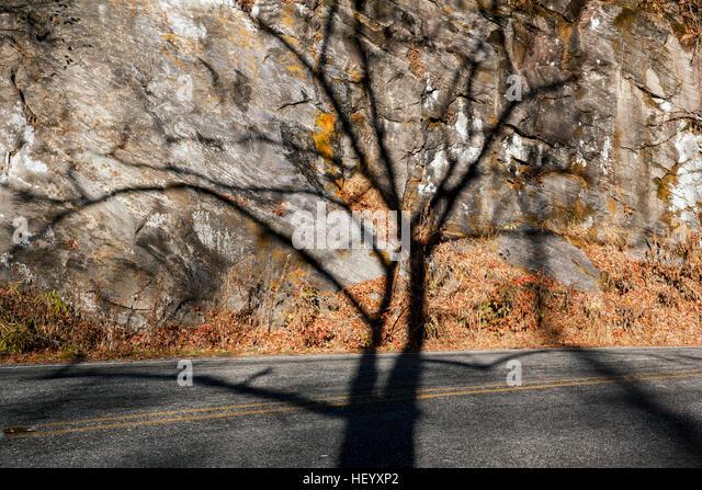 Tree Shadow on Rock Wall - Pisgah National Forest - Brevard, North Carolina, USA - Stock Image