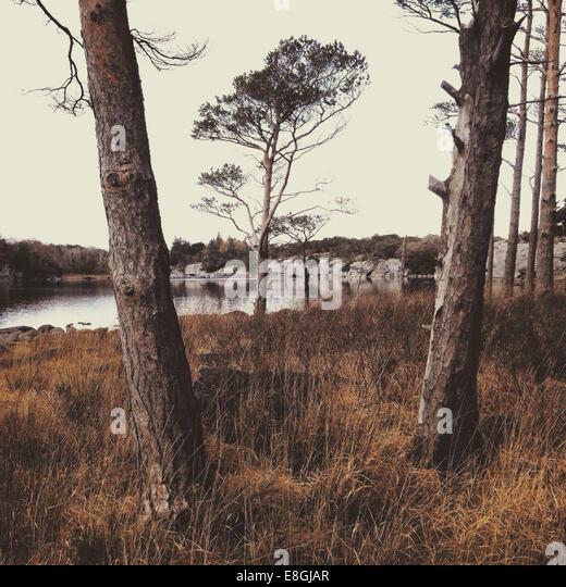 Ireland, County Kerry Ireland, Killarney, Munster, Trees alongside lake in Killarney National Park - Stock-Bilder
