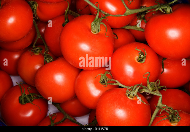 Tomatoes - Stock Image