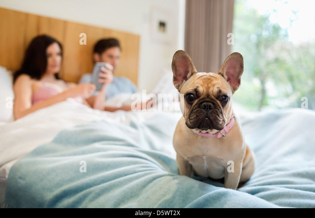 Dog sitting with couple in bed - Stock Image