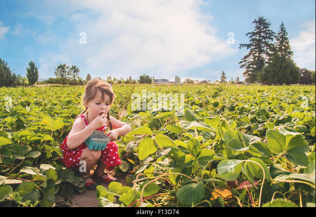 Girl eating a strawberry in strawberry field - Stock Image