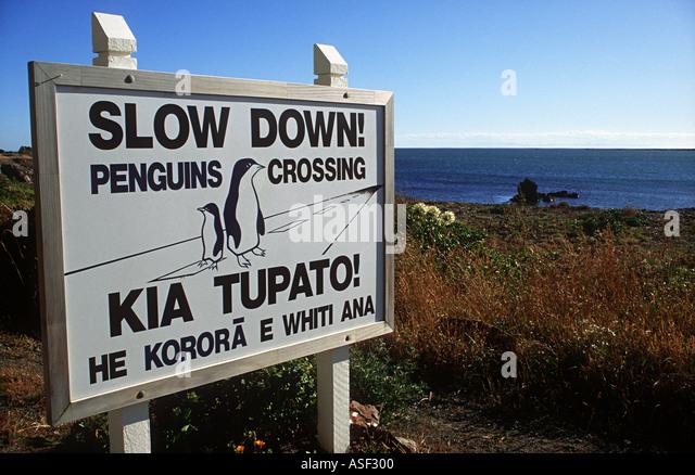 Roadside sign Blue Penguins Eudyptula minor live under coastal houses and so cross road daily Wellington City New - Stock Image