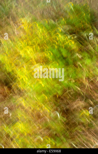 Abstract nature painting style - Stock Image