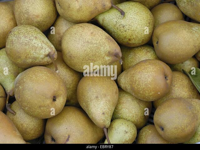 common pear (Pyrus communis 'General Leclerc', Pyrus communis General Leclerc), pears of the vultivar General - Stock Image