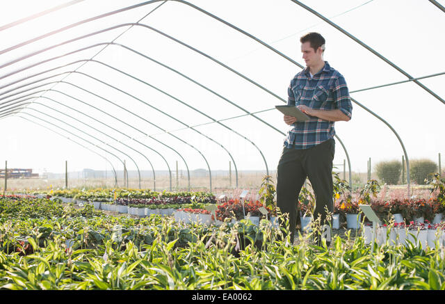 Young male horticulturalist using digital tablet in plant nursery polytunnel - Stock Image