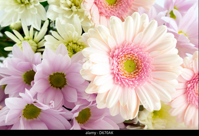 Bouquet of flowers containing chrysanthemums and pink gerberas - Stock Image