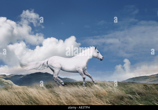 white horse running free across hillside - Stock Image