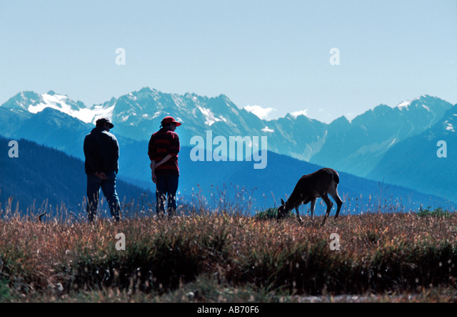 A couple watch a browsing deer in mountain meadow of Olympic National Park Washington in Sept COPYRIGHT DUANE BURLESON - Stock Image
