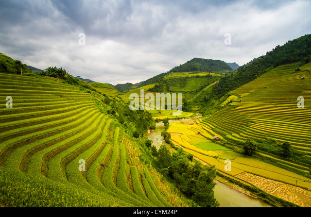 Rice terraces of Hmong ethnic minority, living in northwest mountainous area of Vietnam - Stock-Bilder