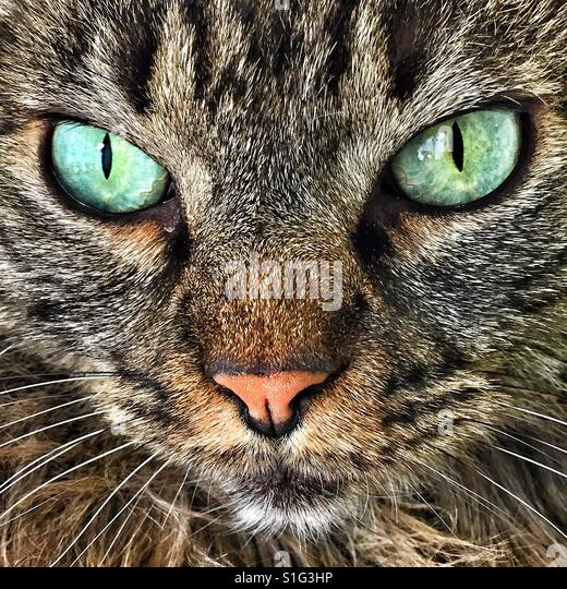 Cat with green eyes - Stock-Bilder