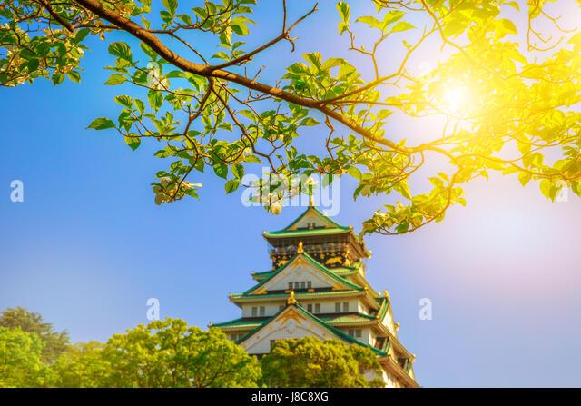 Osaka Castle cherry blossoms - Stock Image