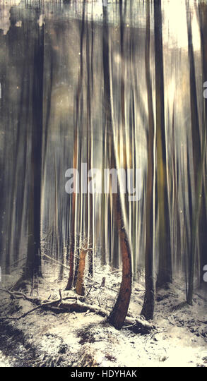 artistic image of the winter forest - Stock Image