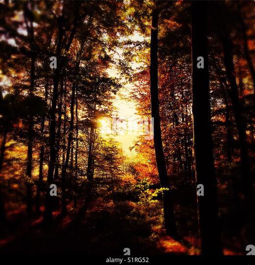 Autumn woods - Stock Image