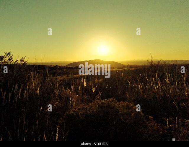 Grasses in the sunset - Stock Image