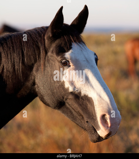 Spanish Horse Head Stock Photos & Spanish Horse Head Stock ...