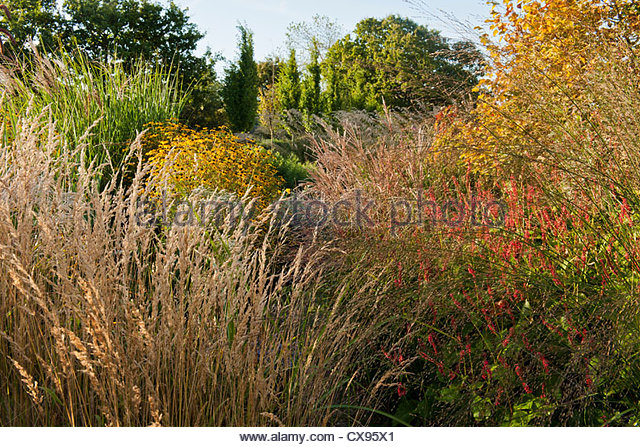 Ornamental grasses stock photos ornamental grasses stock for Ornamental grass border plants