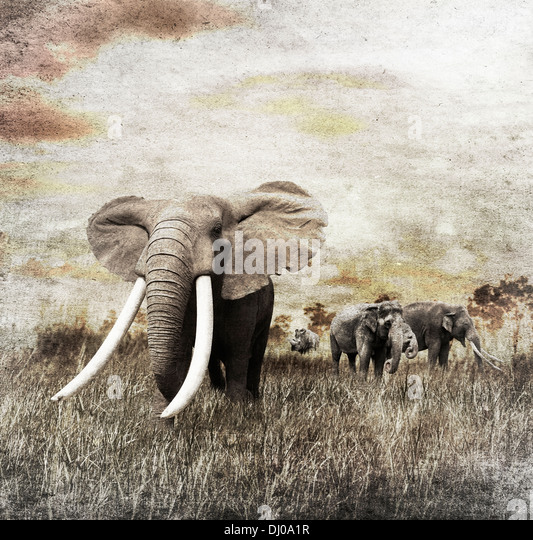 Grunge Image Of Walking Elephants - Stock Image