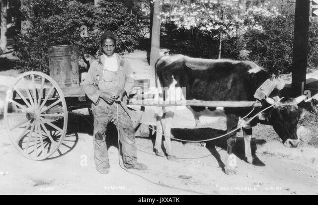 Full length standing portrait of young African American male working outside with wagon pulled by cow, wearing dark - Stock Image
