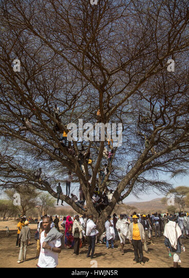 People sit in a tree during the Gada system ceremony in Borana tribe, Oromia, Yabelo, Ethiopia - Stock-Bilder