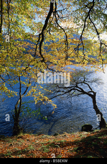 Autumn trees at Ullswater, Lake District National Park, Cumbria, England, Europe - Stock Image