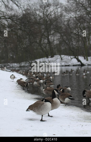 Birds enjoy the serene atmosphere in Alexandra Lake in Wanstead Flats. Credit David Mbiyu/Alamy Live News - Stock Image