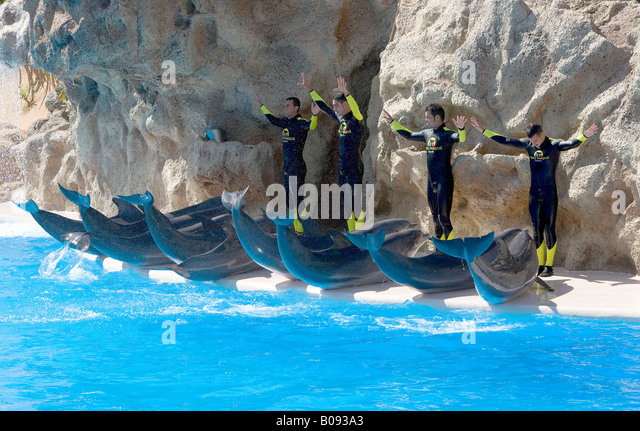Beached dolphins and four trainers during a dolphin show, dolphin aquarium, Loro Parque Zoo, Tenerife, Canary Islands, - Stock Image