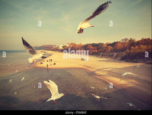 Vintage retro stylized birds above a beach, Baltic Sea, Poland. - Stock Image