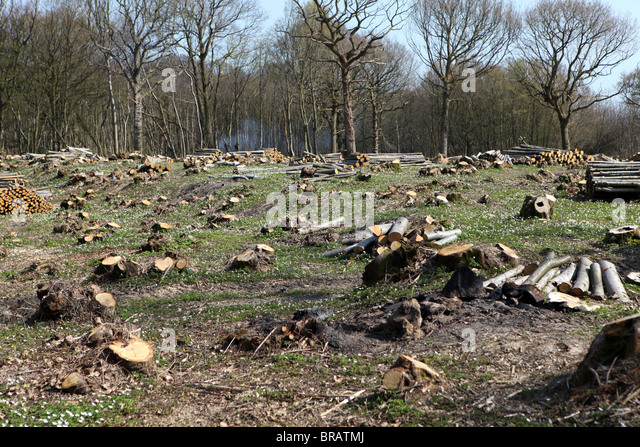 Deforestation and clearing of a wooded area prior to new buildings being erected. - Stock Image