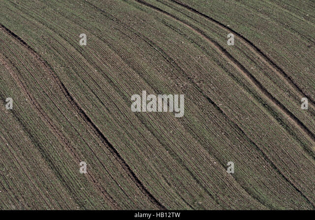 Tractor tracks in a field of a recently sown cereal crop. - Stock Image