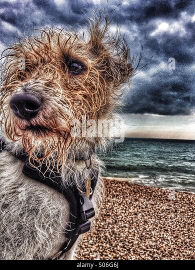 Wet windswept don on sea front - Stock Image