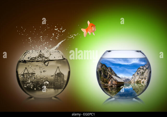 fish rethink and change concept - Stock Image