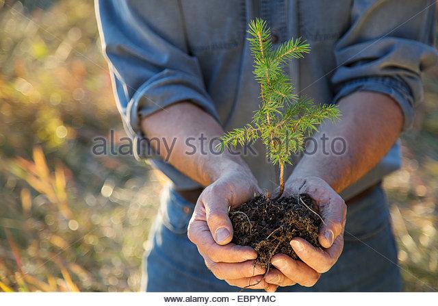 Man cupping tree sapling - Stock Image