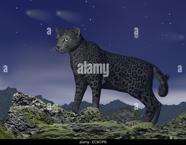 jaguar standing - photo #27