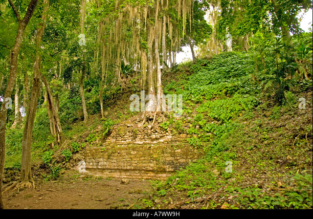 Costa Maya Mexico Chacchoben Mayan ruin overgrown by jungle growth vines tree roots - Stock Image