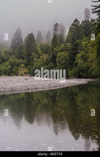 Riverbank of Calm Mountain Creek on Foggy Morning - Stock Image