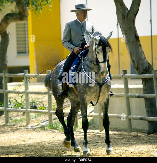 Fine Spanish horseman in traditional costume on a dapple grey Carthusian horse at Yeguada de la Cartuja stud, Andalucia, - Stock Image