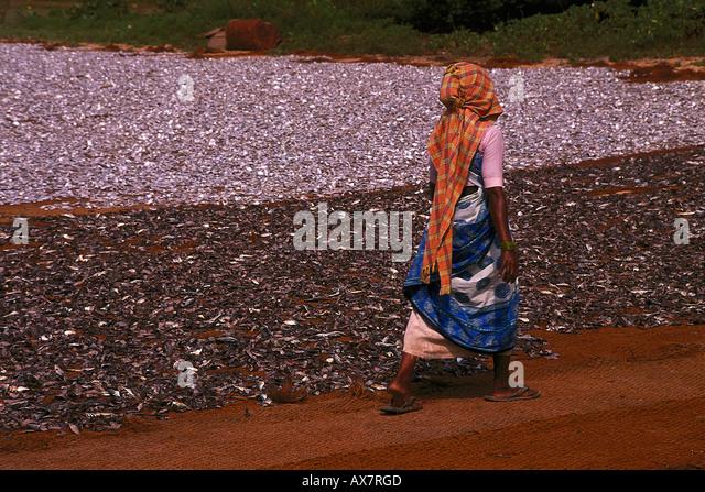 Trockenfischverarbeitung, Goa, Indien - Stock-Bilder