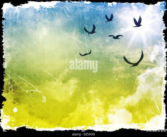 Flying Birds Soar Up Towards The Sun On  A Dramatic Sky - Stock Image