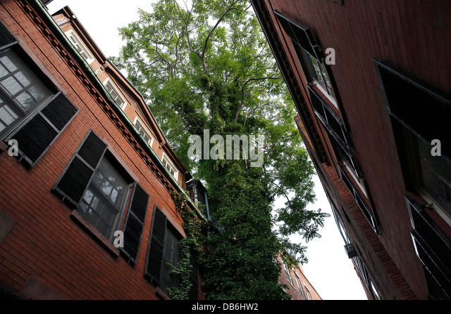 A tree grows between houses in Sentry Hill Place, a narrow pedestrian street on Beacon Hill in Boston, Massachusetts - Stock-Bilder