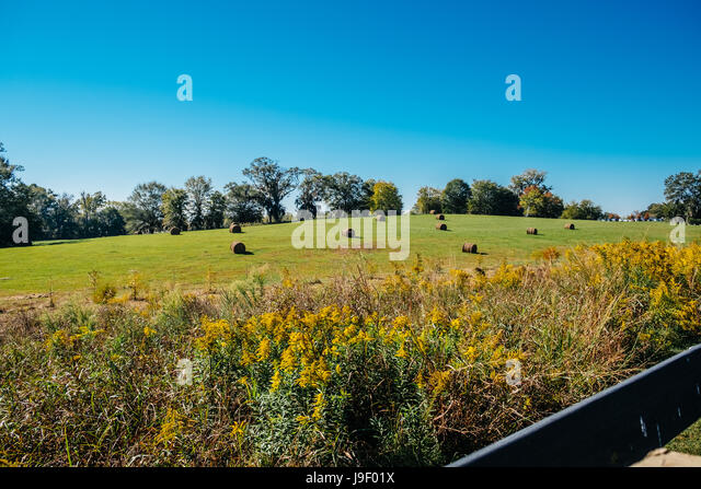 Rolled bails of hay sitting in a farm field in rural Alabama. - Stock Image