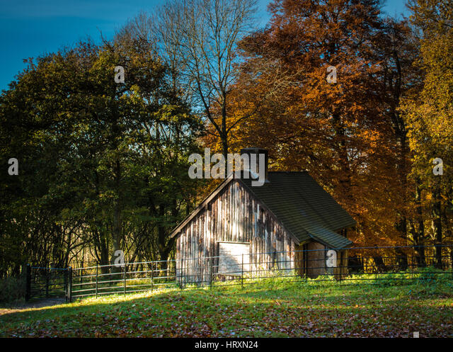 A wooden cabin in the autumn forest - Stock Image