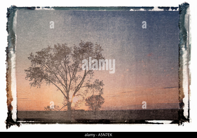 Polaroid transfer of silhouette of lone tree at sunset in rural field - Stock Image
