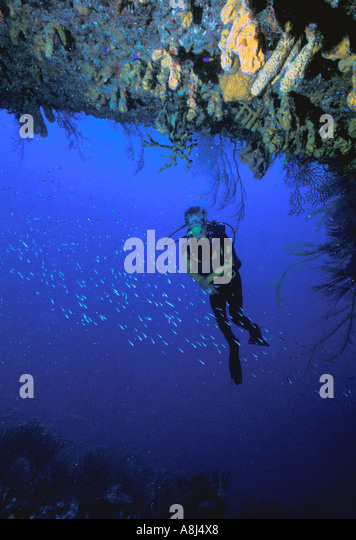 Los Roques Archipelago National Park Venezuela Corrales Inlet underwater - Stock Image