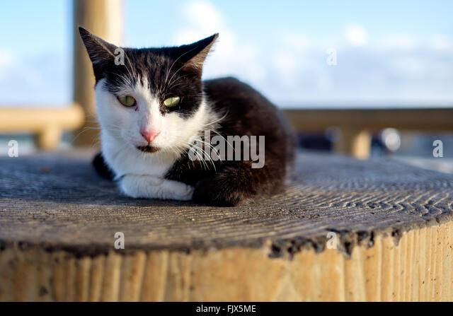Portrait Of Cat Sitting On Wooden Seat In Gazebo - Stock Image