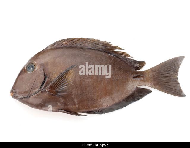 Garra rufa fish stock photos garra rufa fish stock for Fish pedicures near me