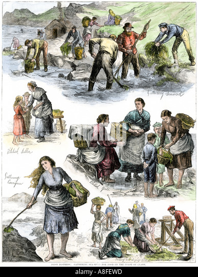 an analysis of the famine in 19th century for ireland Published in 18th–19th - century history, features thomas campbell foster's analysis of the 'condition of the people of and 'famine' out of ireland.
